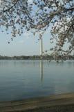 Waszyngton Memorial4 Zdjęcia Royalty Free
