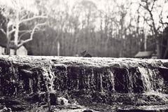 Wat черно-белого изображения парка Sharonwoods пропуская Стоковые Фото