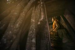Wat Bang Kung. Banyan Tree root covering ancient temple with golden Buddha interior of Wat Bang Kung , founded in 1707, at Amphawa in Samut Songkhram, Thailand Royalty Free Stock Images