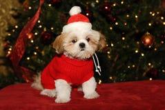 Wat bedoelt u, de Geen Kerstman? Royalty-vrije Stock Fotografie