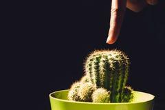 Wat betreft cactus Stock Afbeelding