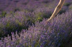 Wat betreft de lavendel Stock Afbeelding