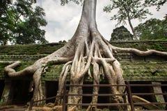wat Cambodia angkor Obraz Stock