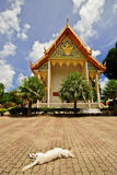 Wat Chalong and the sleeping dog Royalty Free Stock Images