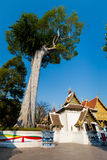 Wat Chedi Luang buddhist temple Royalty Free Stock Images