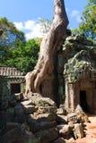 Wat de Angor do naer do templo do prohm de Ta em Camboja Foto de Stock