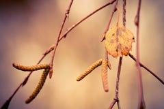 Wat de herfst verliet Royalty-vrije Stock Foto's