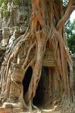 wat för angkorcambodia tree Arkivfoto