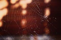 Wat het Web! Royalty-vrije Stock Afbeeldingen