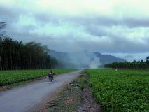 Wat Javanese op een Motor die door Aanplantingen gaan Stock Afbeeldingen