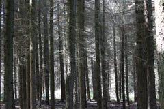 Wat lange pine-wood royalty-vrije stock foto's