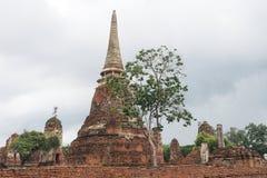 Wat Maha That, Ayutthaya, Thailand Stockbild