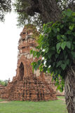 Wat Maha That, Ayutthaya, Thailand. The ruins of Wat Mahathat, a Buddhist temple in Ayutthaya, Thailand with Po tree in the foreground royalty free stock image
