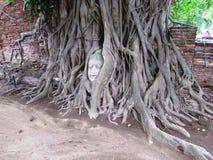 Wat Maha That - Buddha Head in Tree. Wat Maha That - Ayutthaya Thailand with Buddha head in tree Stock Photo