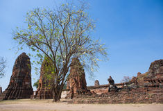 Wat Mahatat in Ayutthaya, Thailand Stock Images