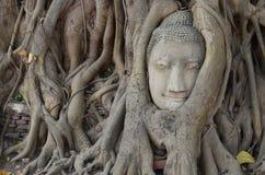 Wat Mahathat, Ayutthaya Fotografia Stock Libera da Diritti