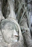 Wat Mahathat Buddha Head Royalty Free Stock Images