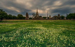 Wat Mahathat With a Flower Foreground Stock Photos