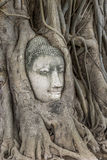 Wat Mahathat. Head of Buddha statue in the tree roots at Wat Mahathat, Ayutthaya, Thailand Stock Images