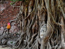 The stone Buddha head Royalty Free Stock Image