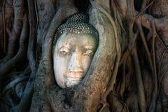 Wat Mahathat Thailand Travel Buddha Tree Roots Stock Image