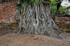 WAT MAHATHAT. Buddha`s head trapped in the roots of the tree.Ayutthaya .Thailand stock photo