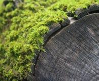 Wat mos op een hout stock fotografie