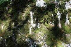 Wat mos op een rots royalty-vrije stock afbeeldingen