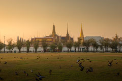 Wat phra kaeo. Many bird and background is Wat Phra Kaew ( the Temple of the Emerald Buddha) in morning. Here is destinations of landmarks traveler stock photo