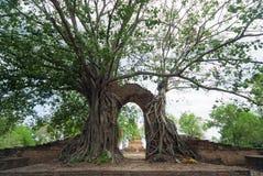 Wat Phra Ngam, Ayudhya省,泰国 免版税库存图片