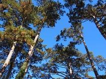 Wat pine-wood royalty-vrije stock foto's