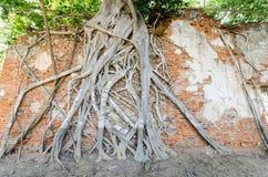 Wat Sang Kratai est 400 années de temple Images libres de droits