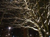 Wat sneeuwregen en zijn mooie zelfs nacht Royalty-vrije Stock Fotografie