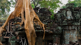 吴哥Wat Ta Phrom 图库摄影