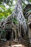 Wat Ta Prohm Fotografie Stock