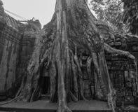 Wat Ta Prohm fördärvar på Angkor Wat Arkivbild