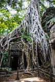 Wat Ta Prohm Stock Photos