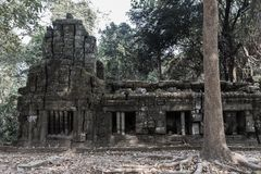 Wat Ta Prohm ruins at Angkor Wat. Ancient ruins of Wat Ta Prohm at the Angkor Wat historical complex in Siem Reap Cambodia. Near the main entrance to the ancient Stock Image
