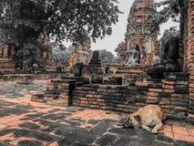 Wat Thai con un perro Imágenes de archivo libres de regalías