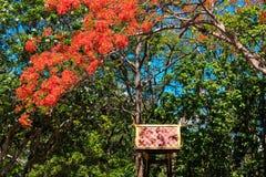 Wat Umong de Chiang Mai en Tailandia septentrional Fotos de archivo