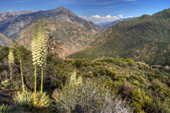 watarrka национального парка королей каньона Австралии Стоковые Фото