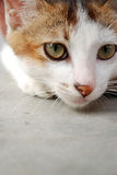 Watch. The cat pay attention for something,and want to catch it Stock Photography