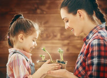 Watch as a growing sprout Stock Photos