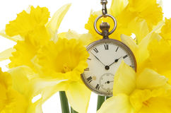 Watch and daffodils Royalty Free Stock Images