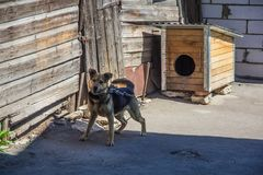 Watch dog on chain near the kennel royalty free stock photos