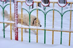 Watch Dog detrás de la cerca en la nieve imagen de archivo