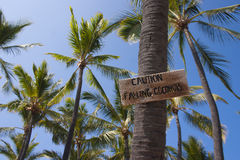 Watch for falling coconuts Stock Photography
