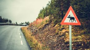 Watch For Moose Road Sign stock images
