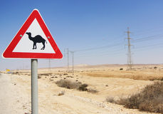 Watch Out for the Camel Royalty Free Stock Image