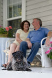 Watchdog. A small gray and black dog sits on an old fashioned porch, looking at the viewer, with his owners conversing in the background, out of focus Royalty Free Stock Image